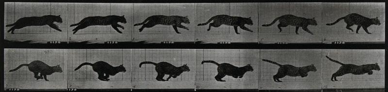 A cat running. Photogravure after Eadweard Muybridge, 1887.