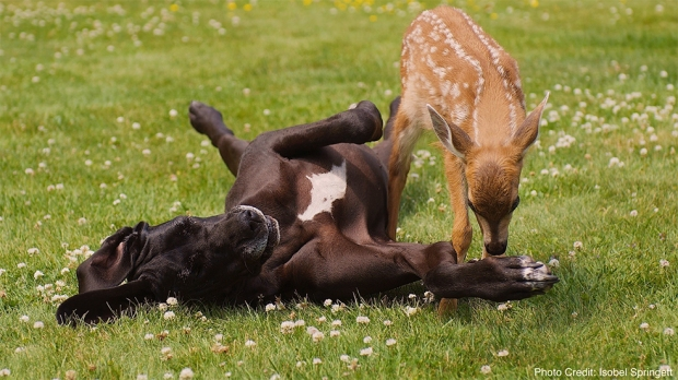 A delighted dog hangs out with his best friend, a deer. Animals clearly have the ability to form friendships, and Laurel Braitman believes they also experience mental illness. Below, our survey on pet emotions. Photo: Courtesy of Laurel Braitman