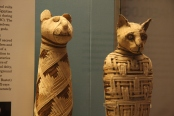 Animal Mummies via British museum,