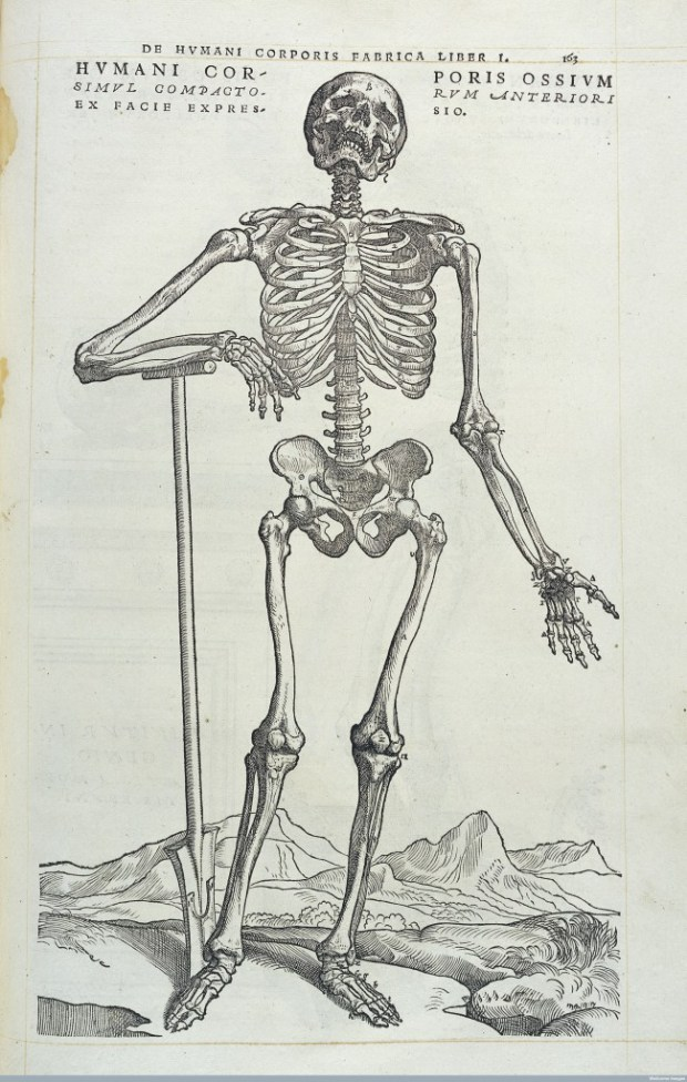 "Vesalius, ""De humani corporis fabrica"", 1543. Credit: Wellcome Library, London."