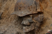 In this photo taken on Tuesday, Aug.  18, 2015, remains of a Soviet soldier are uncovered in a buria site l made in 1943, to be reburied in an official cemetery, near Sinyavino, 50 kms (31 miles) east of  St. Petersburg, Russia. Volunteer search groups have become increasingly popular in Russia in recent years, attracting people of various ages and professions who spend their weekends and vacations digging for remains on former battlefields. They have recovered and buried the remains of thousands of Red Army soldiers. (AP Photo/Dmitry Lovetsky)