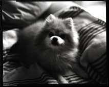 Film Portrait of a Loved Dog by Damari McBride